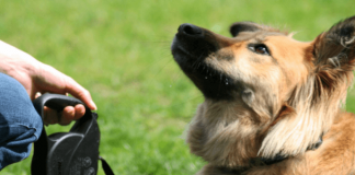 obedience training for dogs